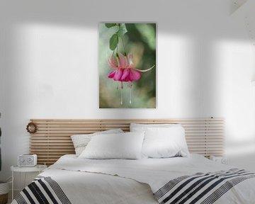 Fuchsienblüte von Ellen Driesse