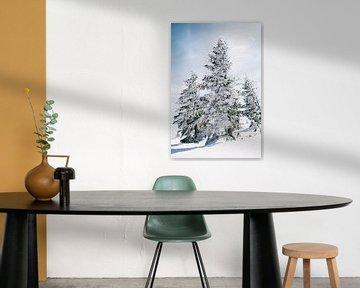 Besneeuwde Bomen van Patrycja Polechonska