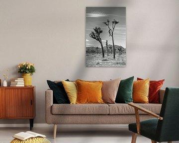 Joshua-Baum-Nationalpark schwarz-weiß von Discover Dutch Nature