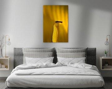 Eine Schwebfliege sitzt auf einem gelben Blütenstempel von Ulrike Leone