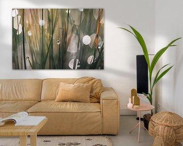 gras en dauw van Tania Perneel