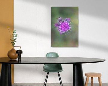 Blühende Purpurdistel von Mariska Wondergem
