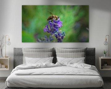 Bei der Suche nach Blumen Lavendel von Mariska Wondergem