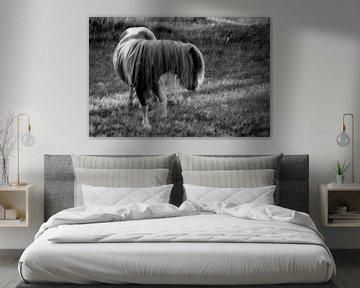 pony in de regen von jan van de ven