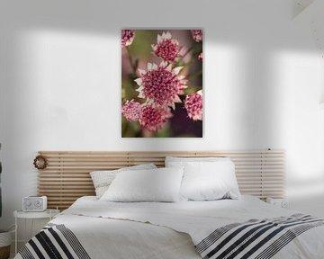 Zeeland-Button rosa von Mariska Wondergem
