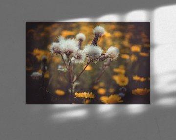 Samen und Blüten von Mi Vidas Fotodesing