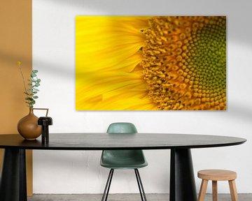 Nahaufnahme Sonnenblume gelb von Mariska Wondergem