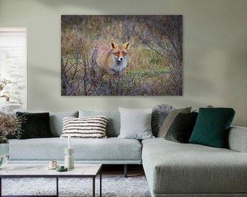 Foxy Lady von Sander Meertins