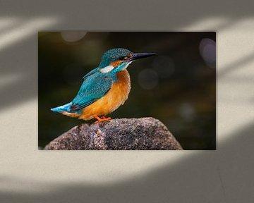 IJsvogel na het rivierbad van Daniela Beyer
