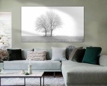 Bäume in Lentevreugd schwarz-weiß von Wim van Beelen