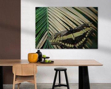 Palmvlinder van Marije Zwart