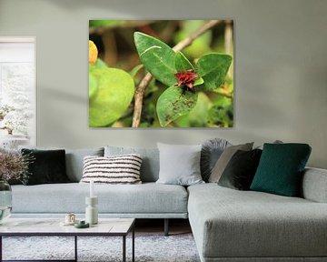 Roestblumen von Marije Zwart
