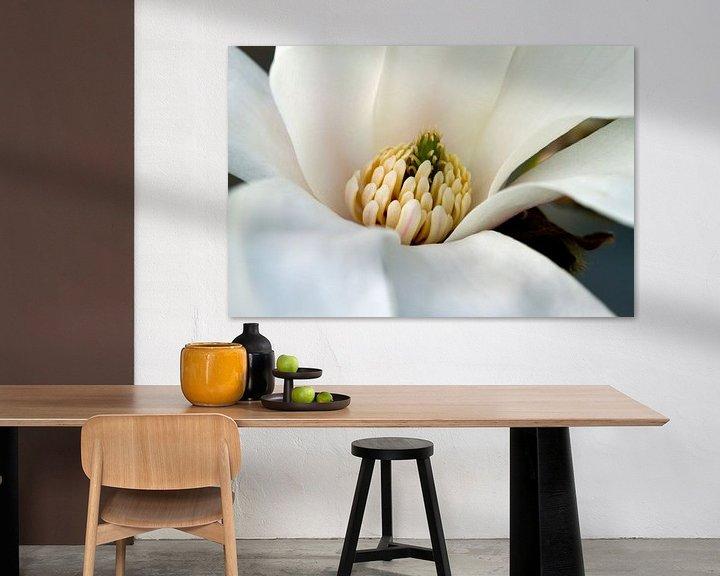 Impression: Magnolia sur José Verstegen