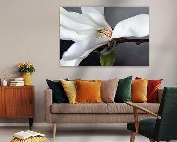 Magnolia 6 von José Verstegen
