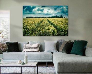 graanveld Oosterwijtwerd (Groningen) van Johan van der Linde