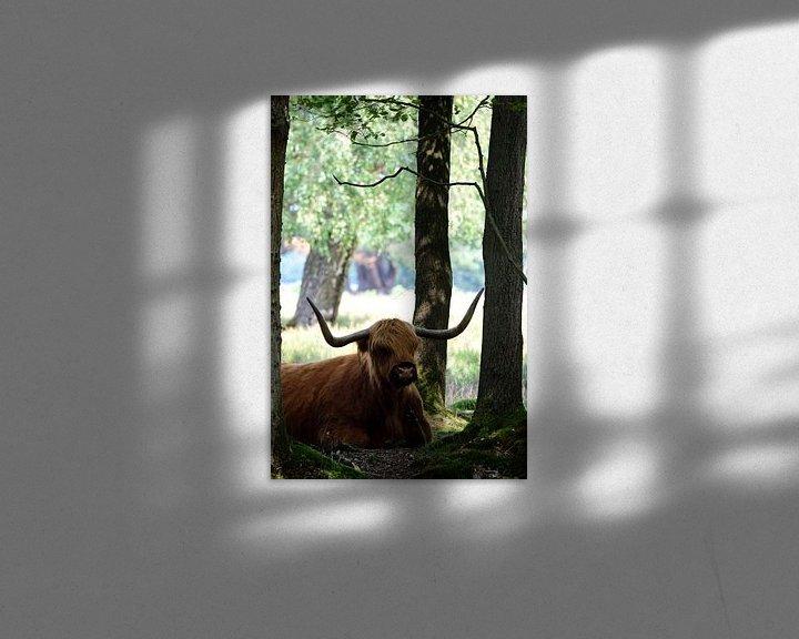 Sfeerimpressie: Een Schotse hooglander tussen de bomen van Gerard de Zwaan