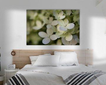 Blütentraum in duftigem Weiß von Joachim Küster