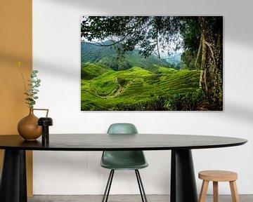 Cameron Highlands Maleisie van Ellis Peeters