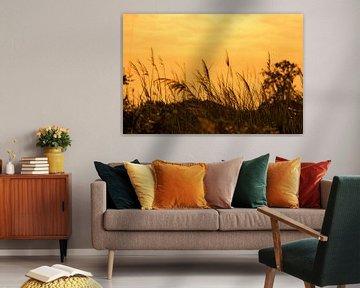 Natur im Sonnenuntergang von Frank Herrmann