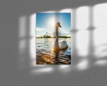 Schwan auf dem Rhein von Günter Albers