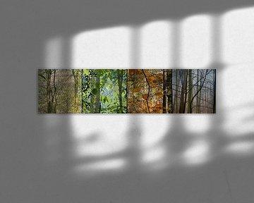 vier Jahreszeiten im Wald von Hanneke Luit