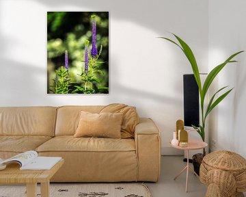 Violette Blume von Martijn Tilroe