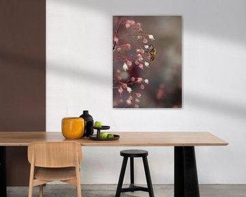 Biene im Traum aus Pink von SallysMacroworld