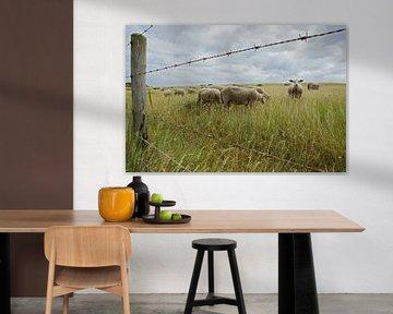 sheep in the field von Dirk van Egmond