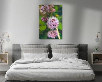 Rosa Blumen auf dem Feld von Greet Thijs