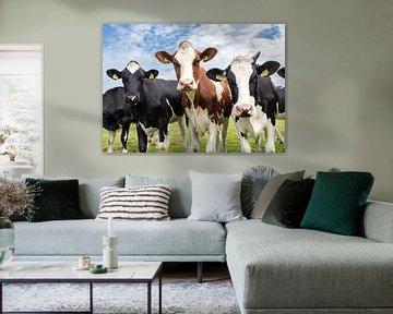 Drie koeien in het weiland van Inge van den Brande