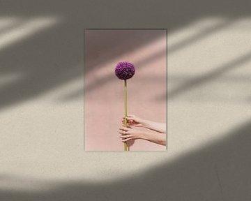Violette Blume von Lotte de Graaf