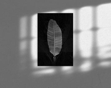 Schwarz-weißes Palmenblatt von Lotte de Graaf