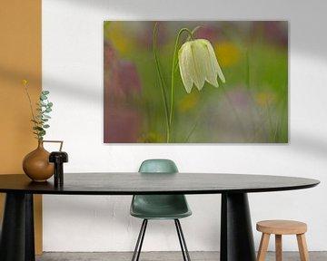 Wildkiebitz Blume von paul van Gaalen