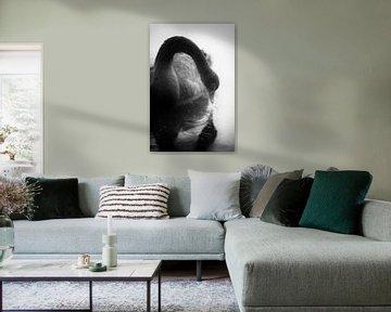 Ein schwarzer Schwan, der in den Spiegel des Wassers blickt, ein märchenhaftes Schwarz-Weiß-Bild von John Quendag