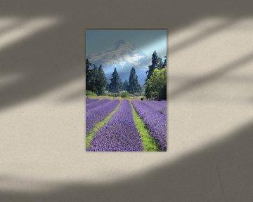 Lavendel aan de voet van Mt Hood - verticaal van Sarah Lugthart