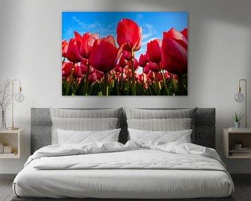 Roze Tulpen van Wouter van Woensel