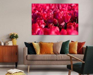 Nur rosa Tulpen von Wouter van Woensel