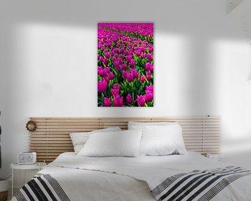 Tulpenveld van Wouter van Woensel