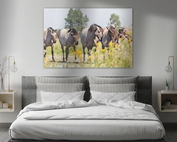 Herde Konik-Pferde am Wasser von Anne Zwagers