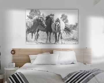 Schwarz-weiße Statue von wilden Konik-Pferden in den Niederlanden von Anne Zwagers