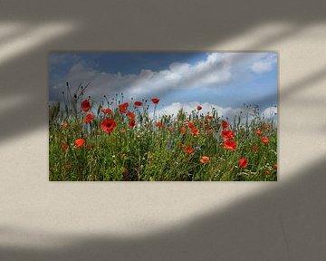 Mohn und Kornblume sur Dianne van der Velden