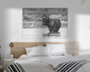 Zwarte Schotse Hooglander koe in het water van Anne Zwagers