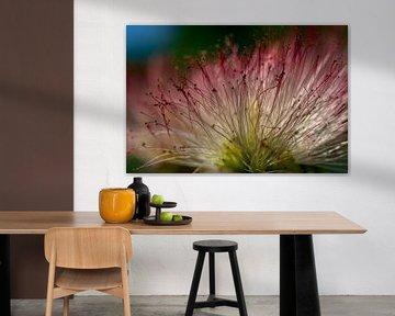 Nahaufnahme Blume Persischer Schlafbaum von Paul Veen