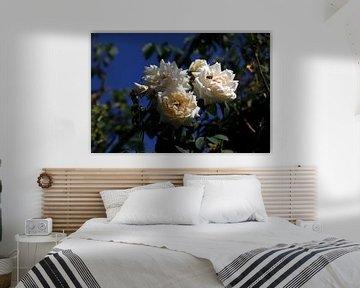 Rosen von Thomas Jäger