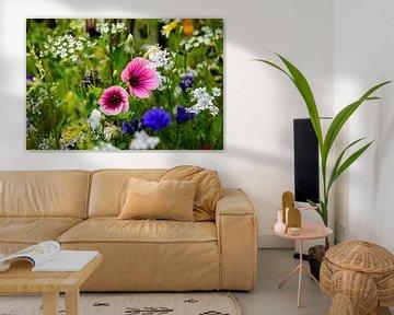 Blumen, Blumenfeld, bunt, Niederlande von Shoot2Capture2