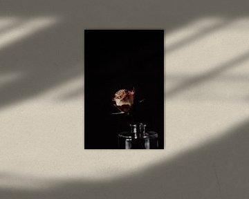 Clair-obscur Roos van Vandaag is nu