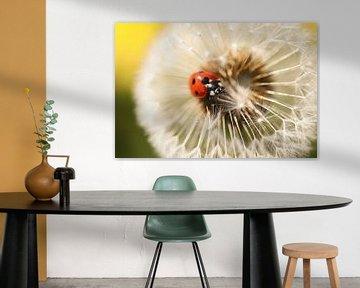 Lieveheersbeestje op paardenbloem van Isabel van Veen