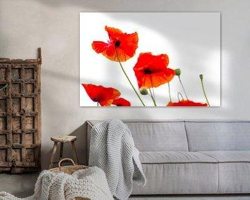 Mohnblumen von Inge Jansen