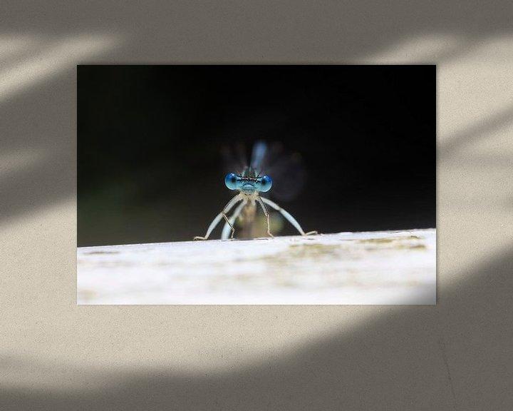 Beispiel: Libelle von Thomas Jäger