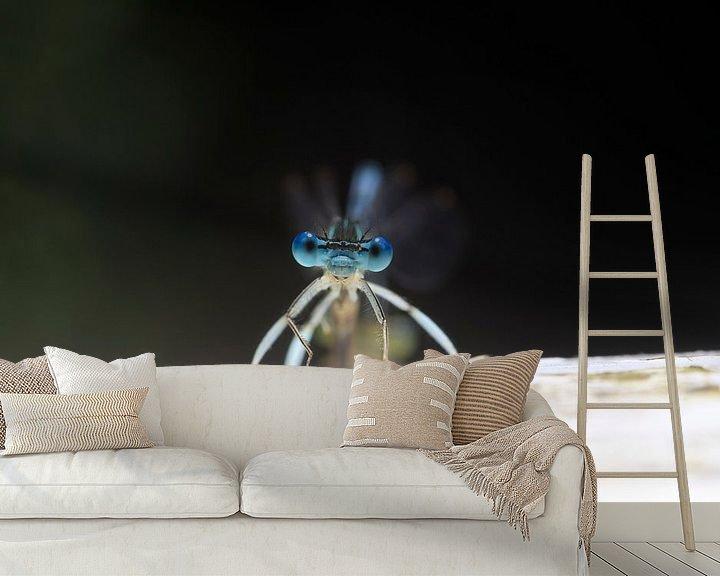 Beispiel fototapete: Libelle von Thomas Jäger